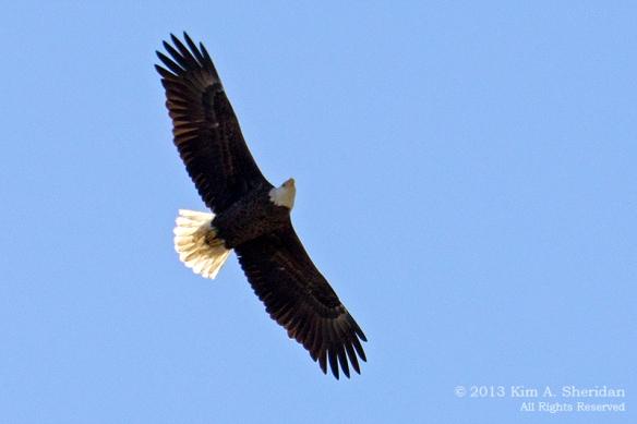 3 HNWR Eagle_5559