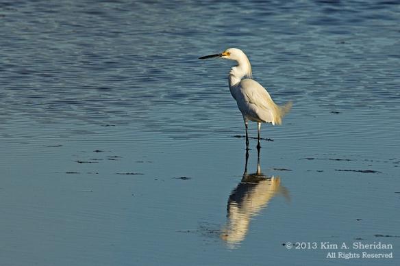CM Matts Landing_3339 Egret a