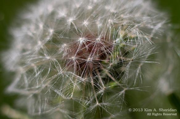 Macro Flower_3432 a