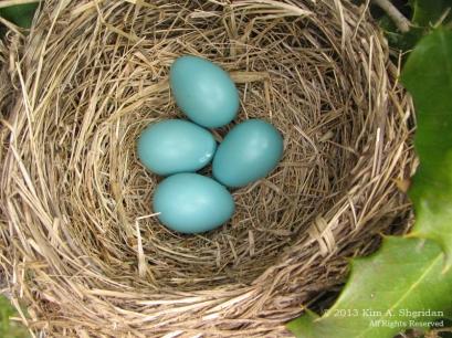 Nest_1299