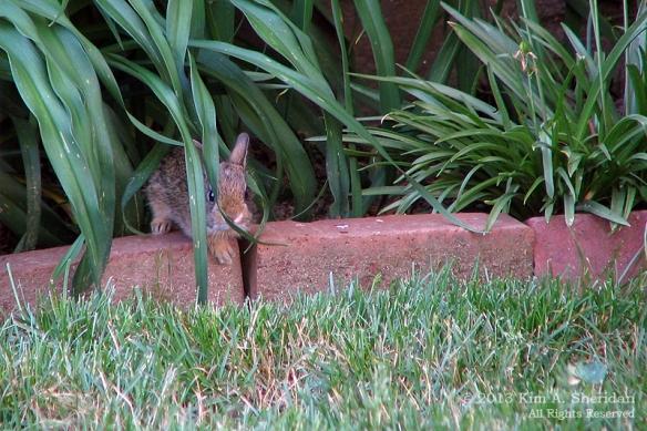 RabbitBaby_3300