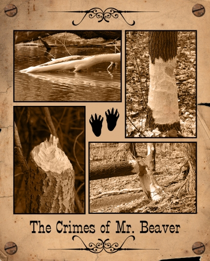 Beaver Collage 4