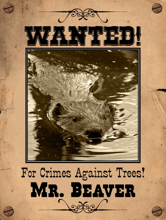 Beaver Wanted Pster 1
