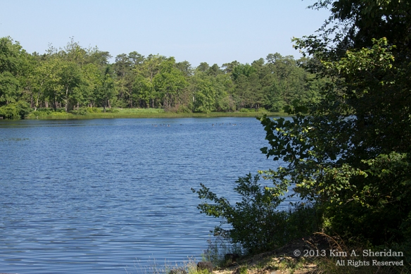 Pine Barrens Batsto_3230 a