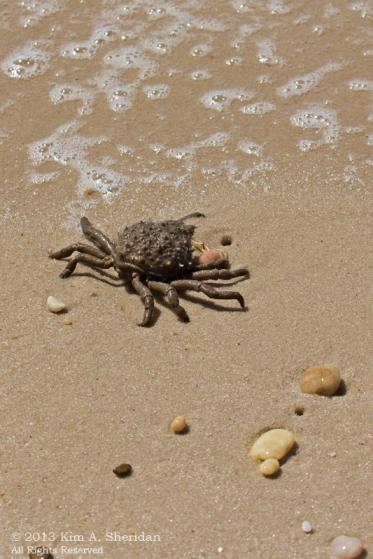 CM Higbee Beach_9945 a