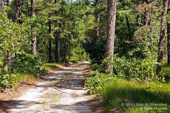 Pine Barrens Marthas Furnace_3343 a
