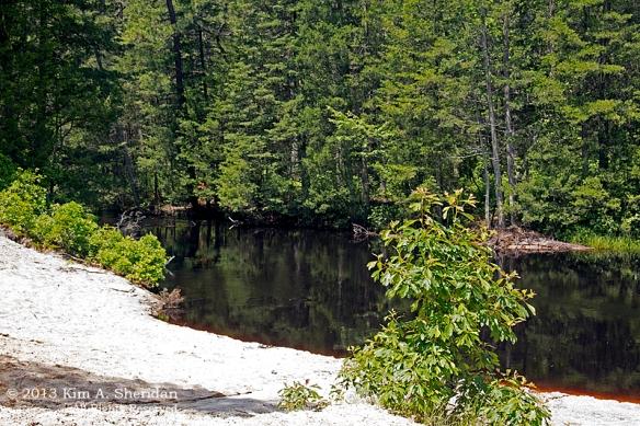 Pine Barrens Marthas Furnace_3371 a
