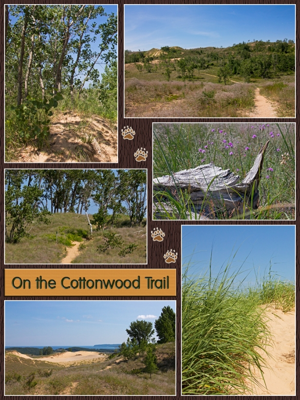 04 Cottonwood Collage