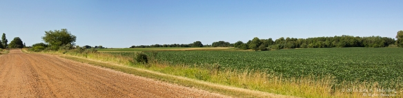 Country Road Pan a