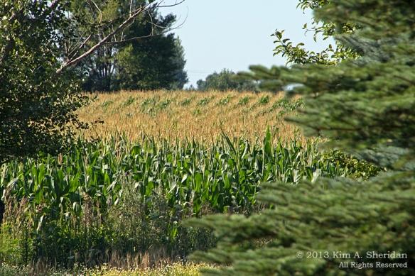 MI Farm Country_7597a