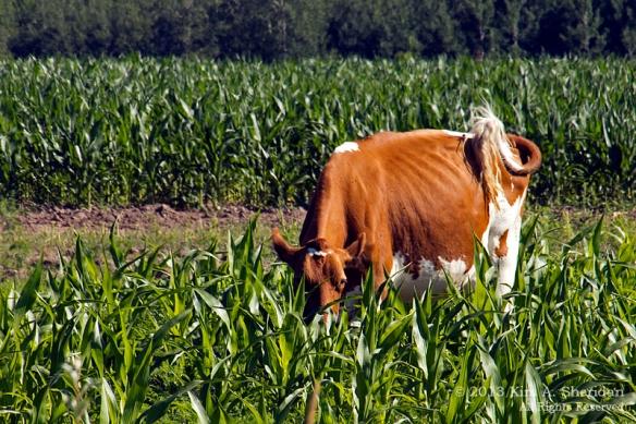 MI Farm Country_7623a