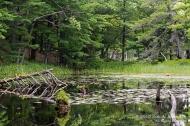 MI LSP Lost Lake-Island Trail Flower Tree_6037 a