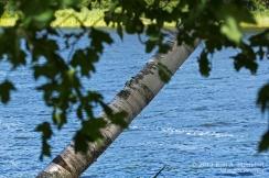 MI LSP Sable River Trail_7179 a