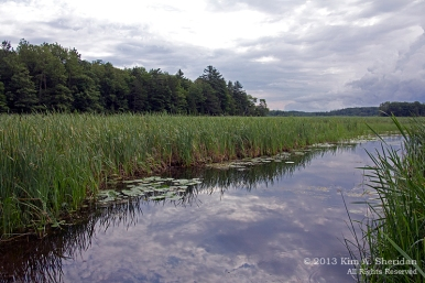 Marsh on Hamlin Lake