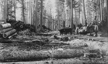Photograph_of_Banks_of_White_Pine_Logs_in_Northern_Michigan_-_NARA_-_2129576