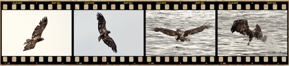 Eagle Filmstrip 1 No text