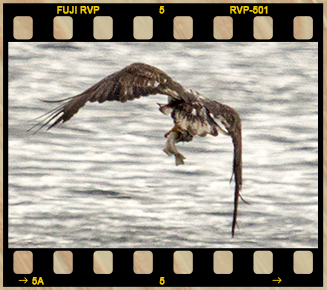 Eagle Filmstrip 2 No Text