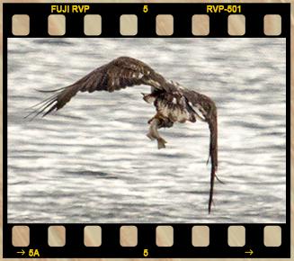 Eagle Filmstrip 2 No Text