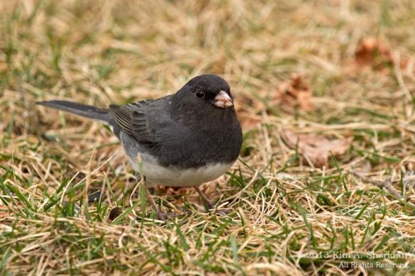 Feeder Birds_8384 ACS
