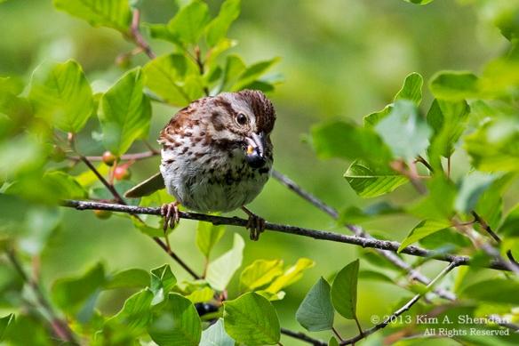 MI Mitchell SP Bird_7291a