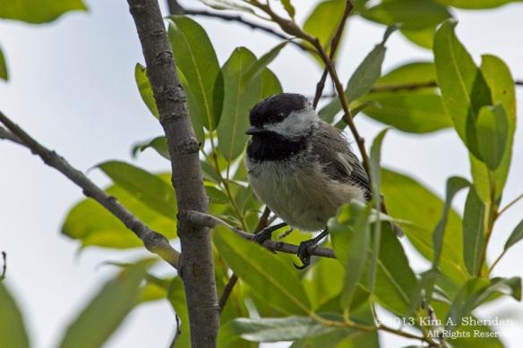 MI Mitchell SP Bird_7415a