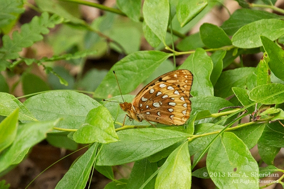 MI Nordhouse Dunes GSF Butterfly_5898a
