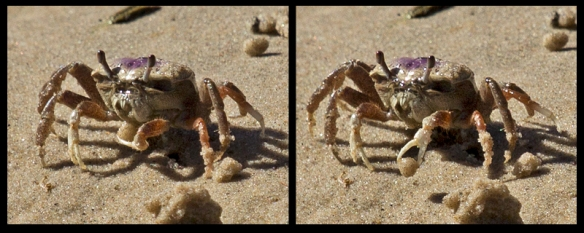 Crab Collage 1