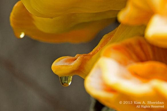 HNWR Fungus_9245