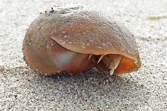 OC Hermit Crab_092723