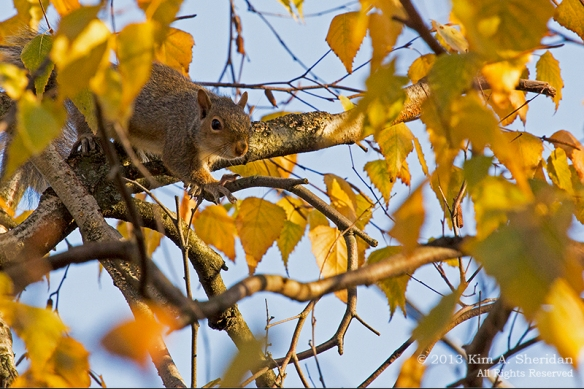 Autumn at Home_0145a