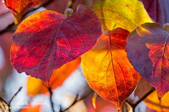 Autumn at Home_0153a