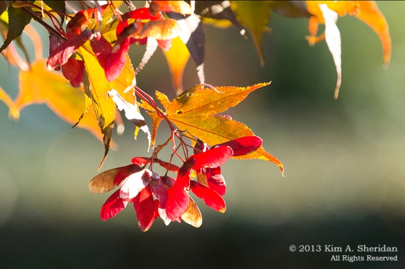 Autumn at Home_0295a
