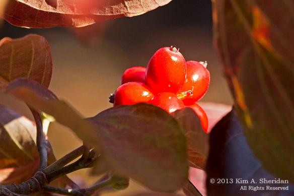 Autumn at Home_0310a