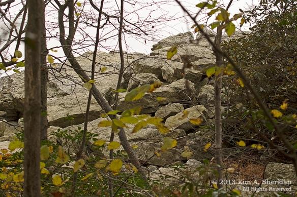 Hawk Mountain Rock_0573a