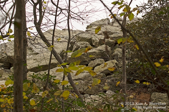 Hawk Mountain Rock_0573a