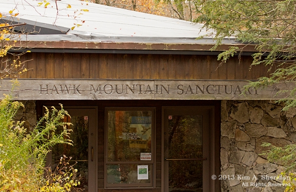 Hawk Mountain_0372a