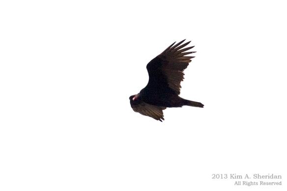 Hawk Mountain_0721a