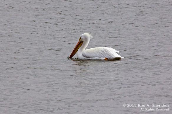 White Rock Lake_6877a