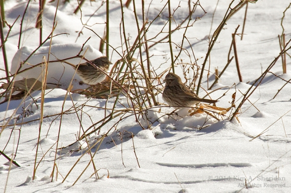 HNWR In Snow_8780a