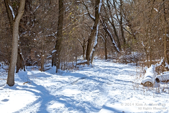 HNWR In Snow_8817a