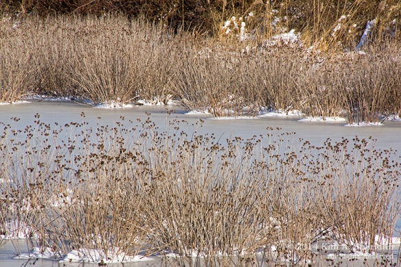 HNWR In Snow_8890a