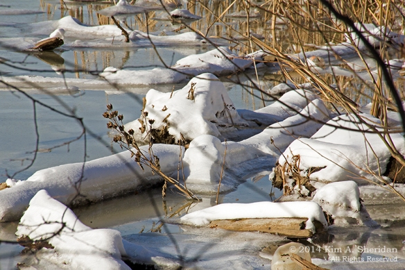 HNWR In Snow_8909a