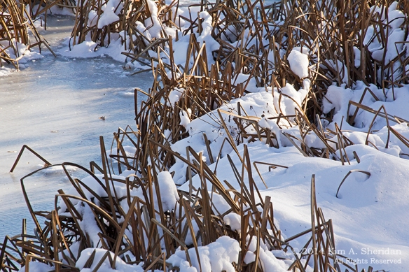 HNWR In Snow_9005a