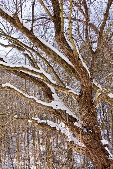 Smedley Snow_9992a