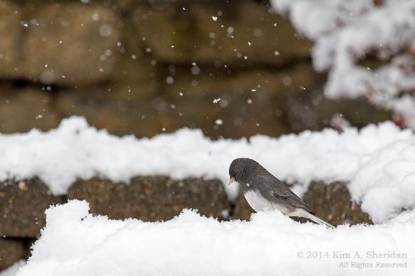 Snow at Home_5624acs