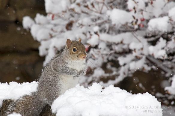 Snow at Home_5634acs