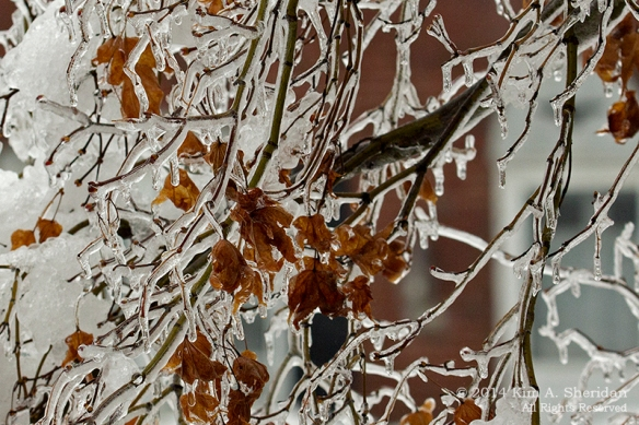 Ice Storm_ 1523a