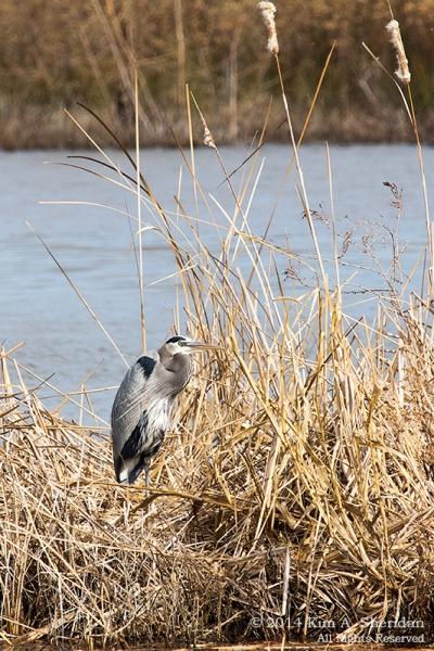 Fort Worth NCR Bird_8087 a
