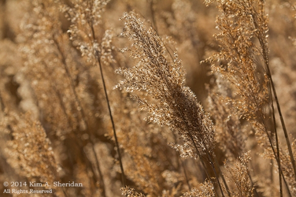 Fort Worth NCR Grass_8157a