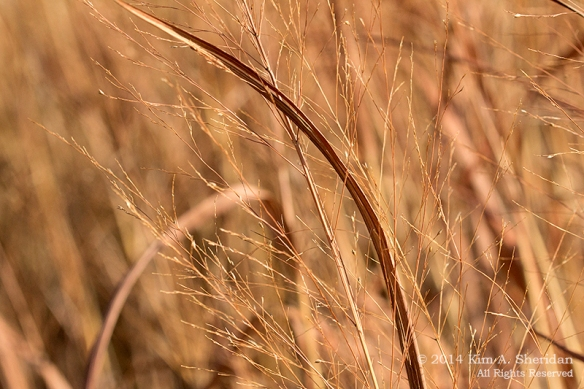 Fort Worth NCR Grass_8506 a